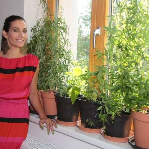 Eva Decastelo a okno SOLID COMFORT